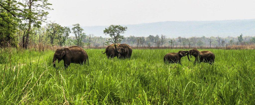 Chitwan Jungle Safari Tour 2 nights 3 days
